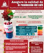 Asegure la calidad de la recolección del café