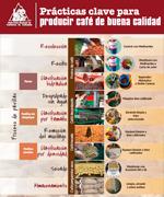 Prácticas clave para producir café de buena calidad