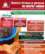Retire frutos y granos de inferior calidad
