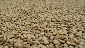 PRECIO INTERNO DE LA CARGA DE CAFÉ ALCANZA HISTÓRICO $1.340.000