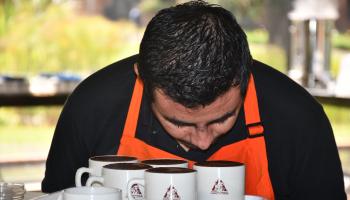 EXPORTACIÓN DE MUESTRAS DE CAFÉ SIN VALOR COMERCIAL SIGUE SIN CONTRIBUCIÓN CAFETERA